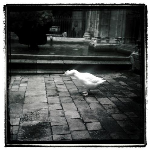 2012_1111AE_Snapseed